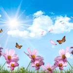 Summer, butterfly's and flowers wallpaper