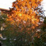 2015-10-11 soleniloven